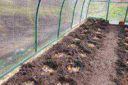 Чем удобрять грунт при посадке томатов?