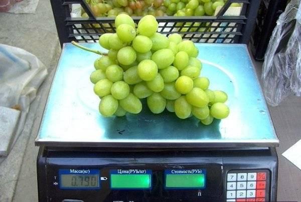 Адари — виноград