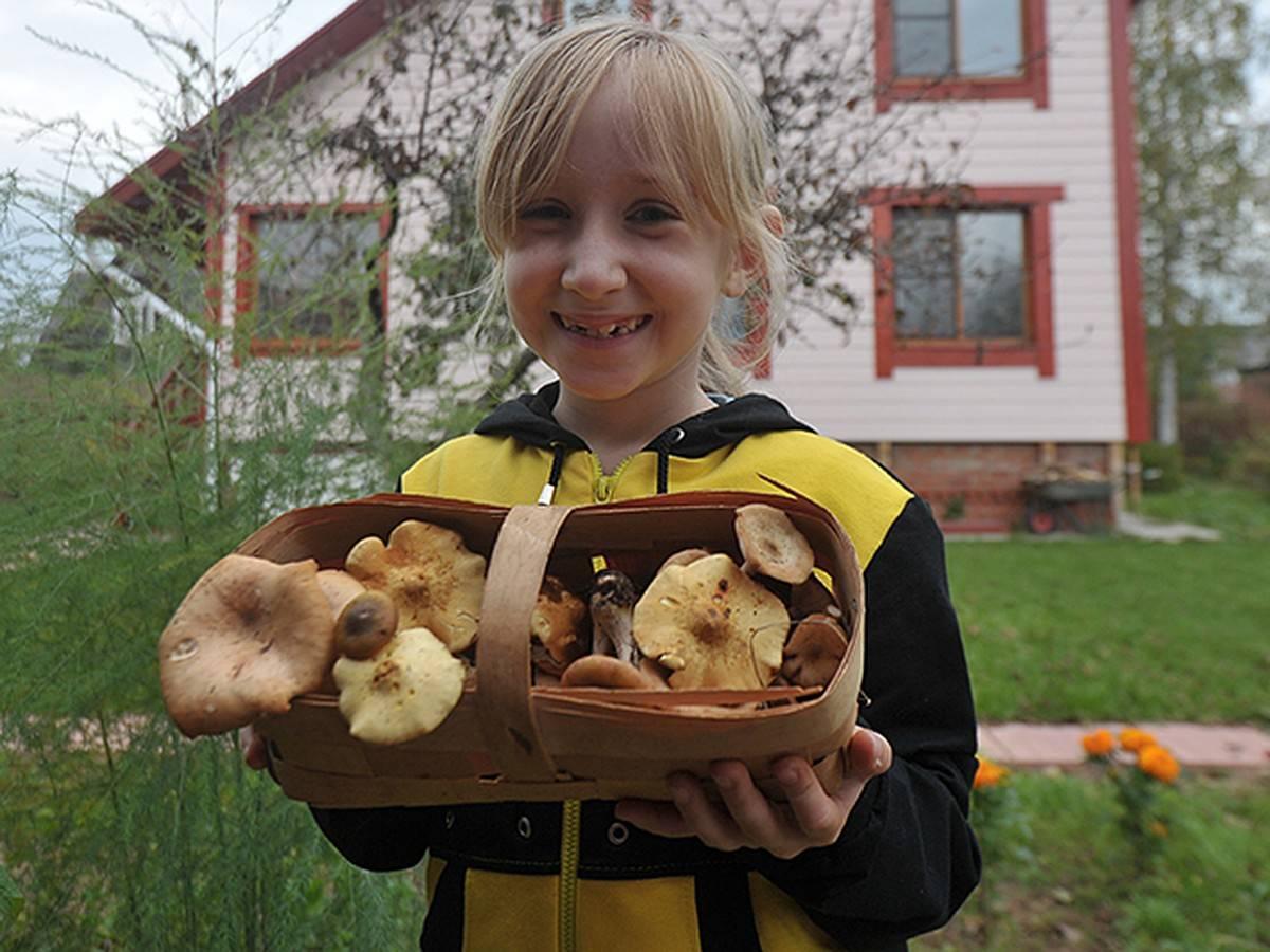 Морской гриб: польза и вред, калорийность, рецепты простых салатов