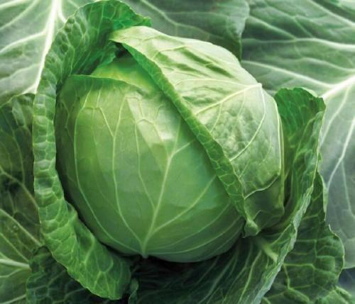 Интересные факты про савойскую капусту