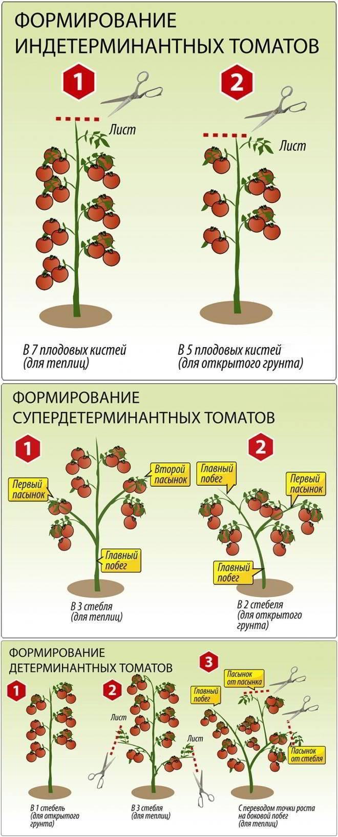 Как правильно прищипывать помидоры в теплице