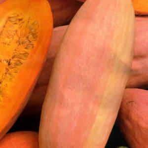 Тыква розовый банан — описание сорта, фото, отзывы, посадка и уход