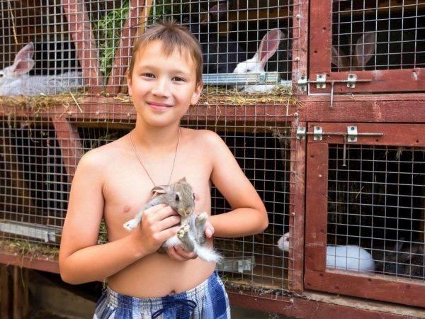Как сделать клетку для кроликов из сетки своими руками