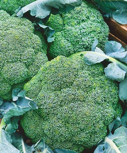 Семена капуста брокколи монако f1: описание сорта, фото