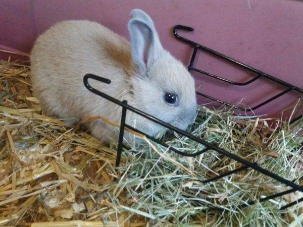 Сенник своими руками: как сделать ясли для кроликов в домашних условиях