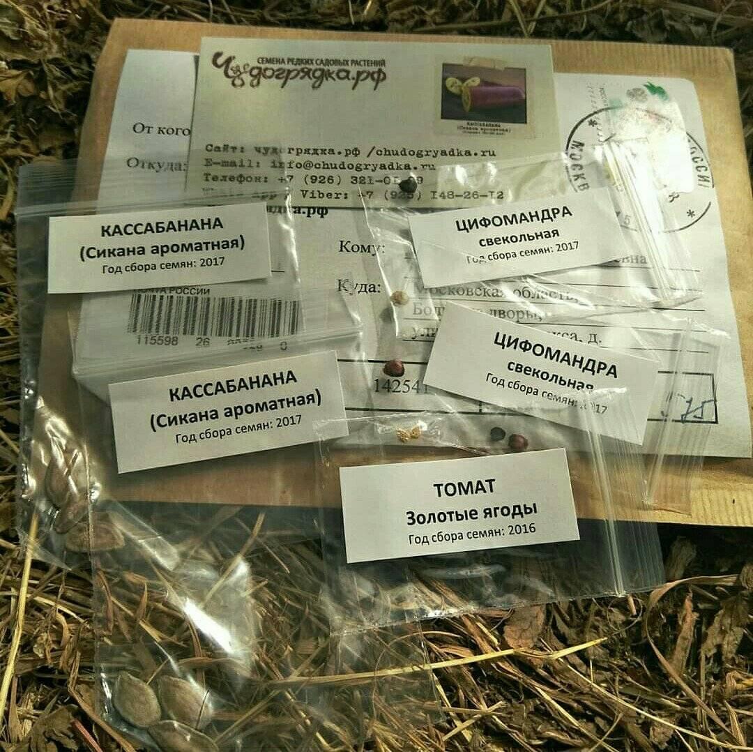 Камассия посадка, уход и выращивание в открытом грунте, поведение в ландшафтном дизайне, фото, выращивание из семян