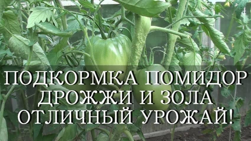 Подкормка помидоров дрожжами – как и когда использовать дрожжевую подкормку