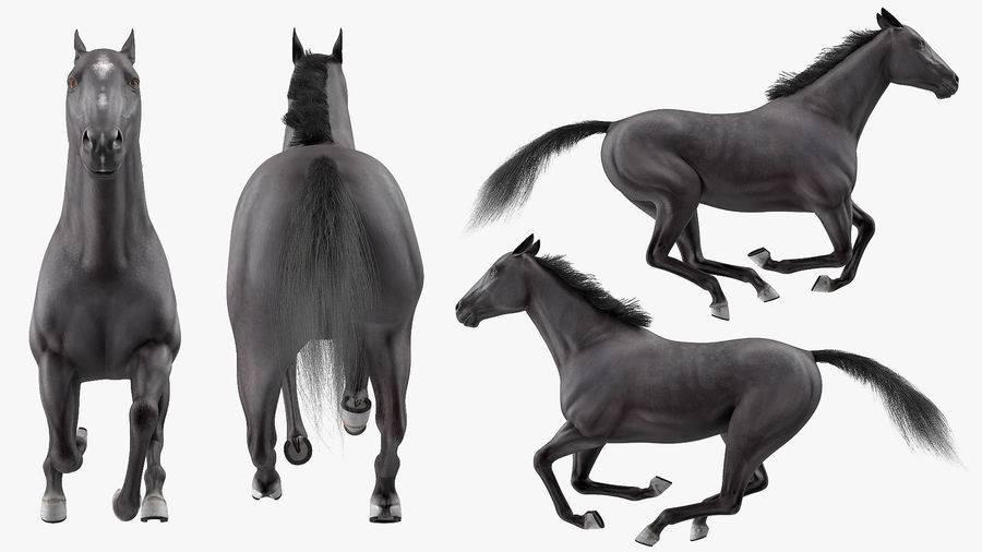 Аллюры лошадей – характеристики и виды 2021