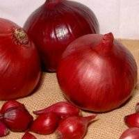 Топ-6 сортов красного лука. описание и характерные особенности
