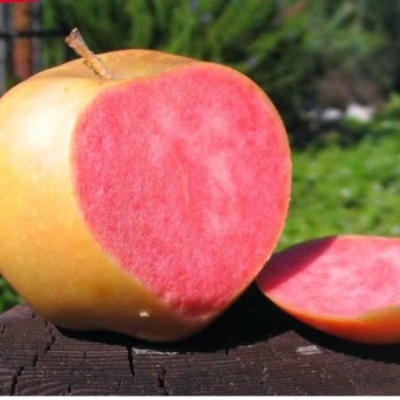 Виноград розовый жемчуг описание сорта. выращивание, отзывы и фото. розовый жемчуг — сорт яблок с розовой мякотью