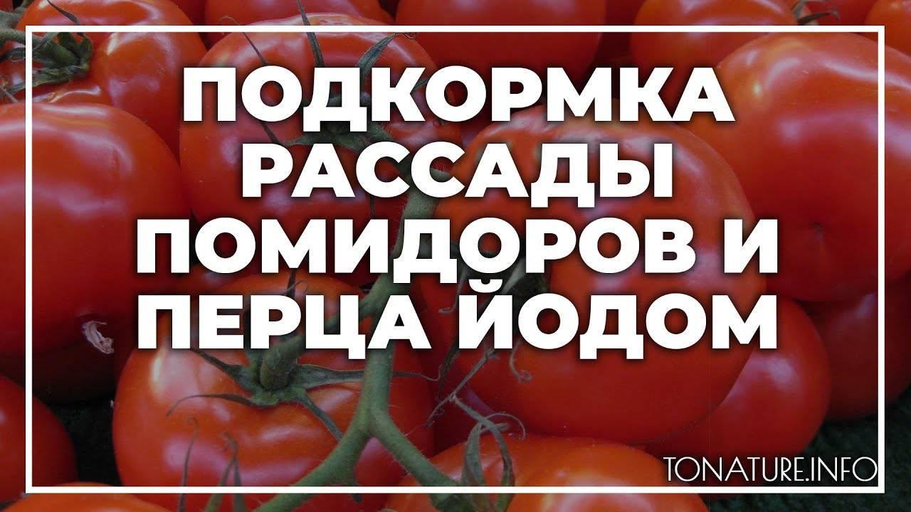 Как подкормить рассаду томатов и перцев йодом
