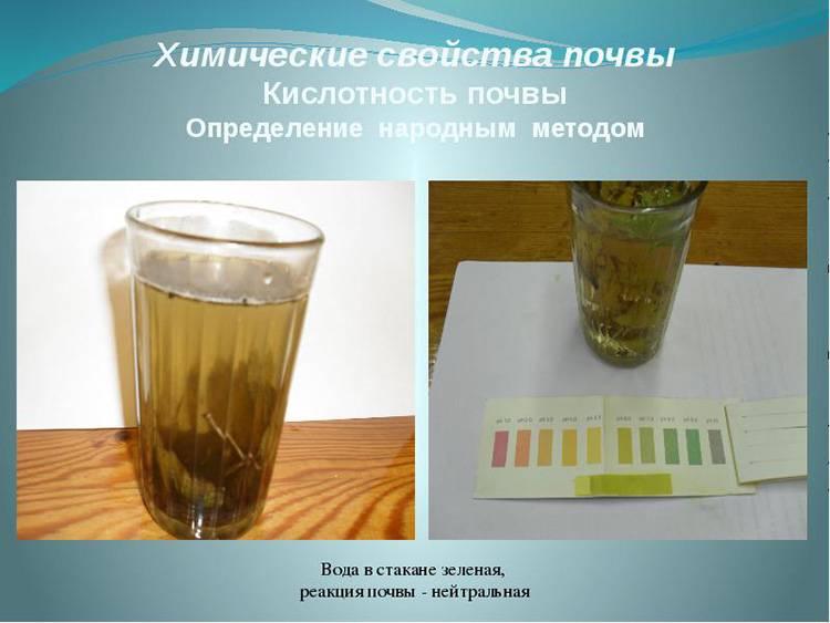 Кровяная мука — натуральное и эффективное удобрение