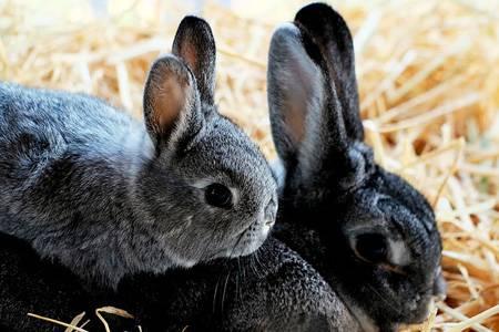 Новорожденный молодняк у кроликов: когда отнимать, как кормить и ухаживать