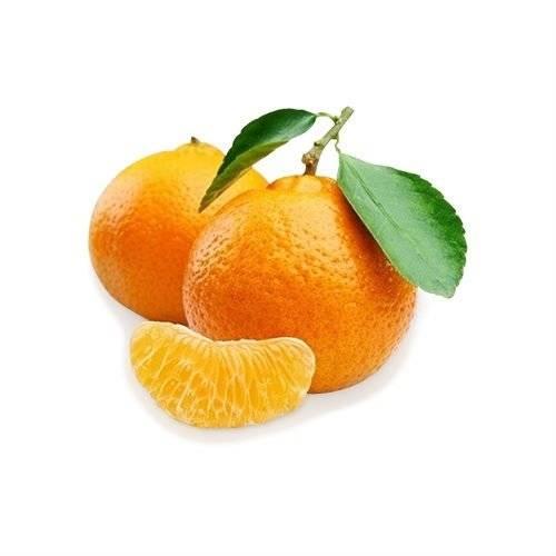 Клементин дома: как вырастить плодоносящее мандариновое дерево в домашних условиях? | огородники