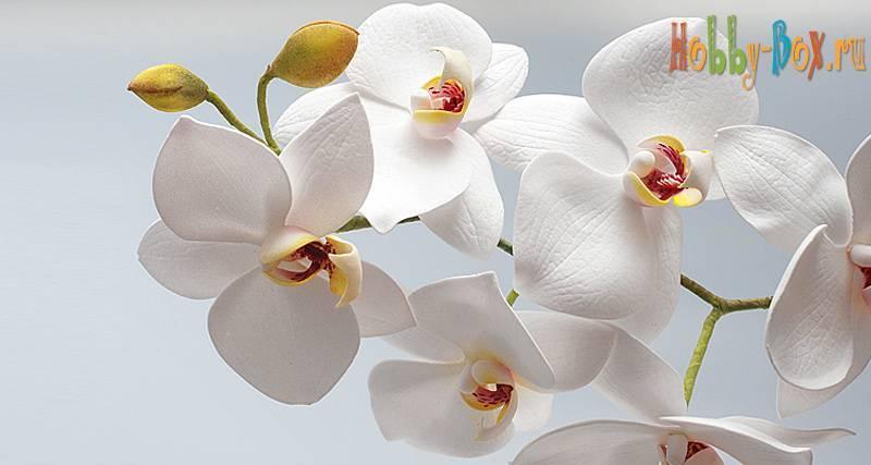 Синяя орхидея: фото, описание цветка, выращивание и правила ухода - sadovnikam.ru