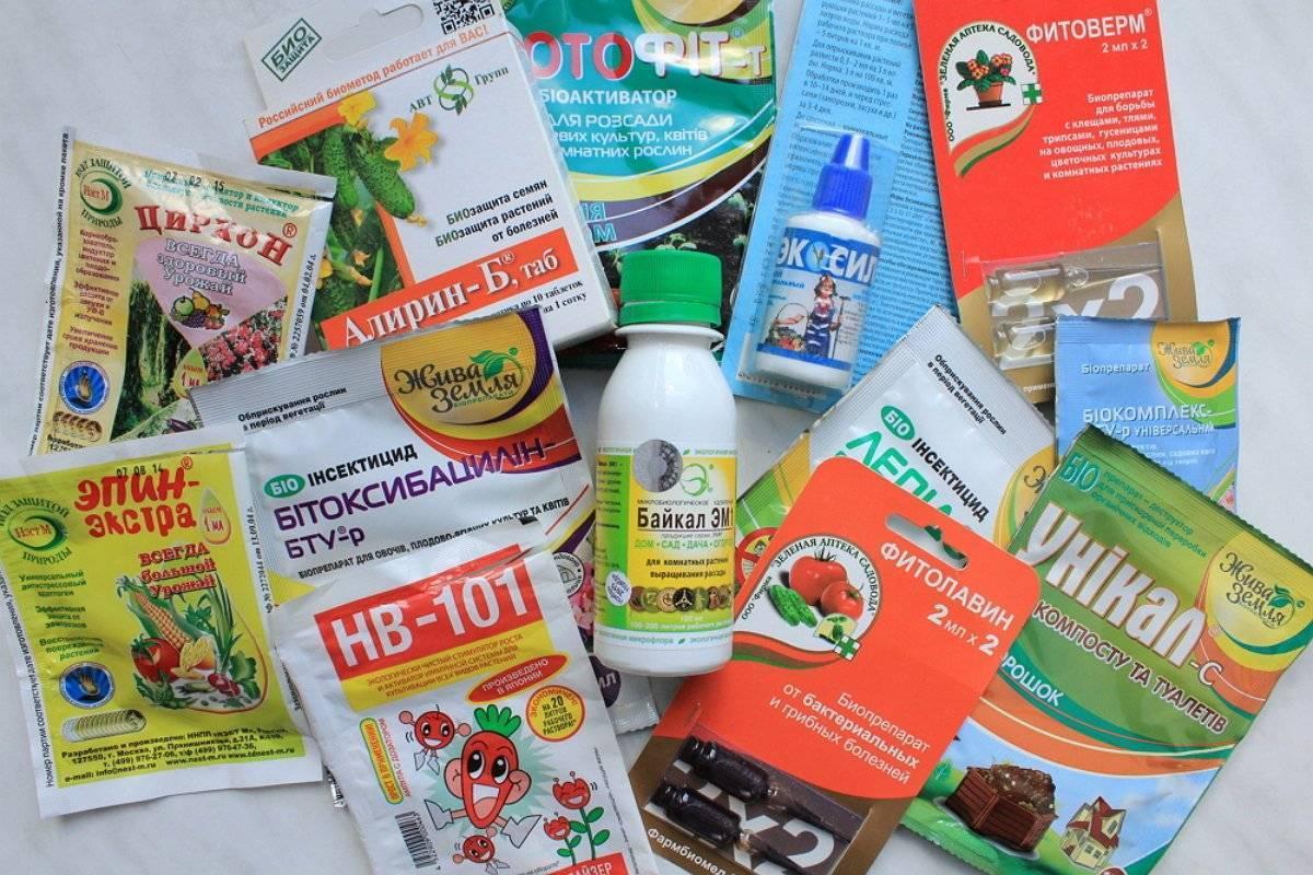 Пестициды — химическая защита растений от болезней и вредителей