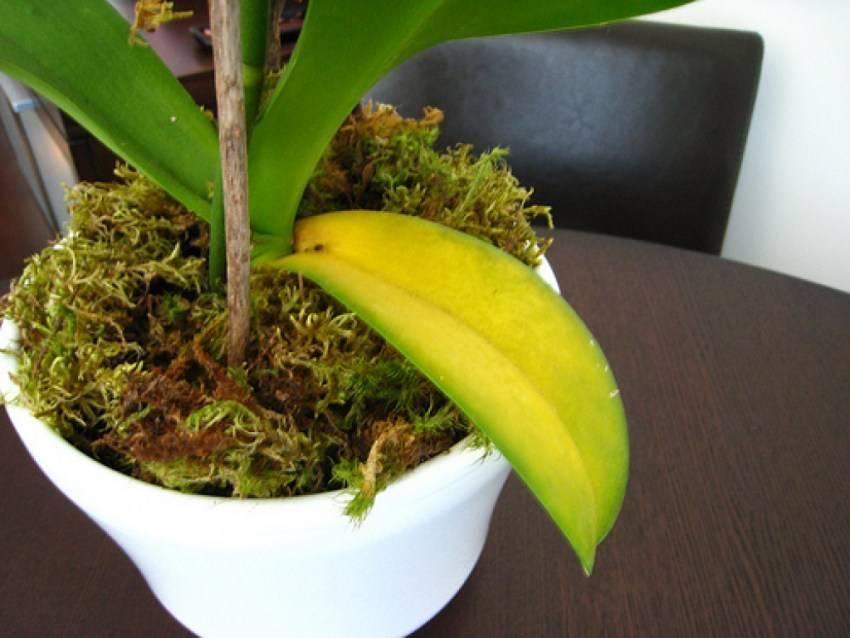 Почему желтеют листья у комнатных растений и что делать