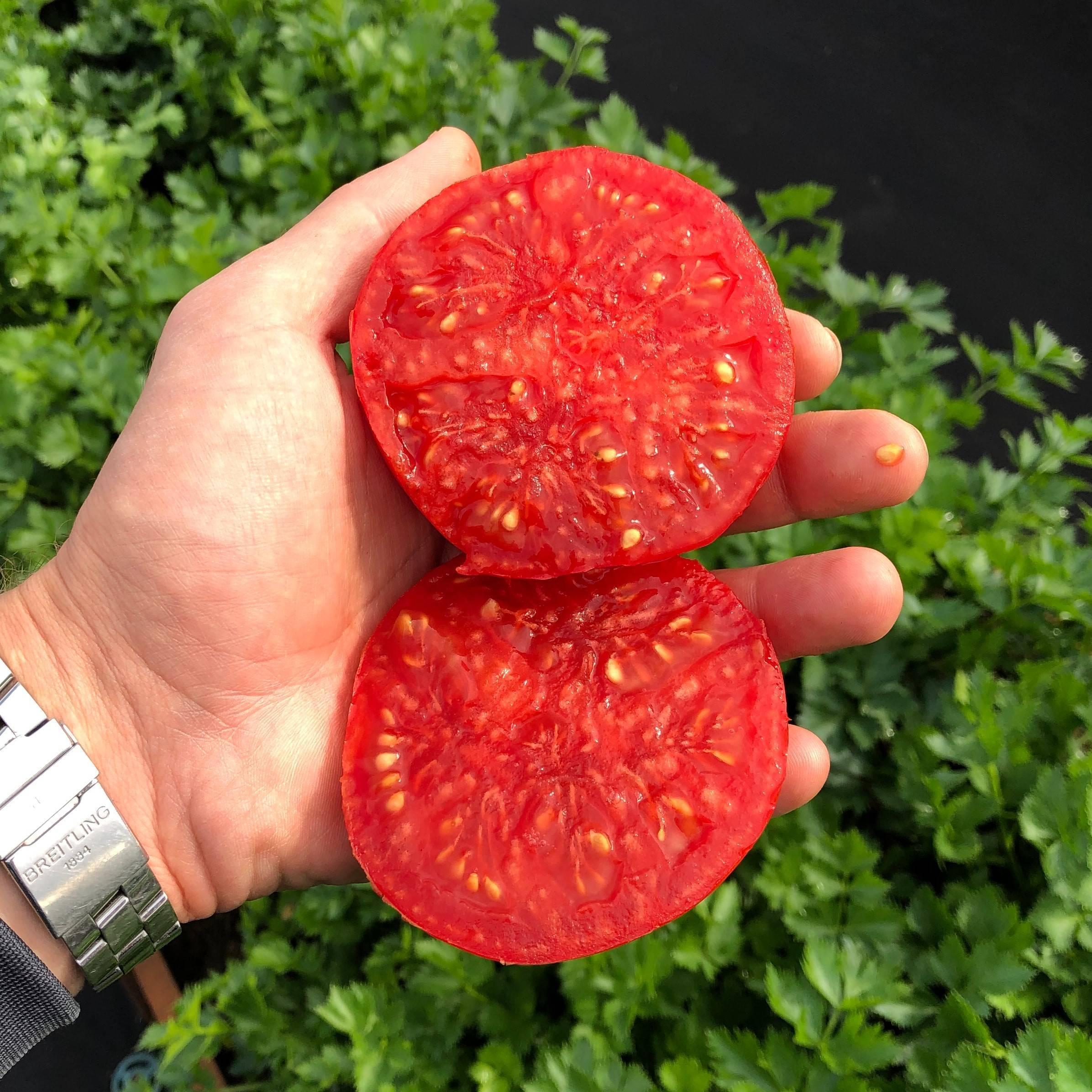 Описание сорта томата японский карлик и урожайность - всё про сады