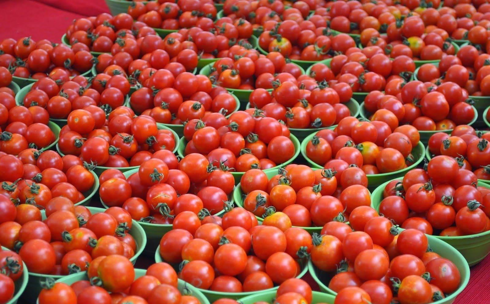 Описание томата снегирь и агротехника выращивания сорта