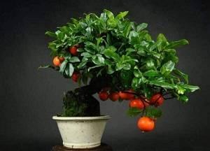 Как вырастить хурму из косточки в домашних условиях и получить урожай
