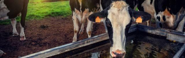 Кормушка для коров своими руками - тонкости изготовления, полезные советы