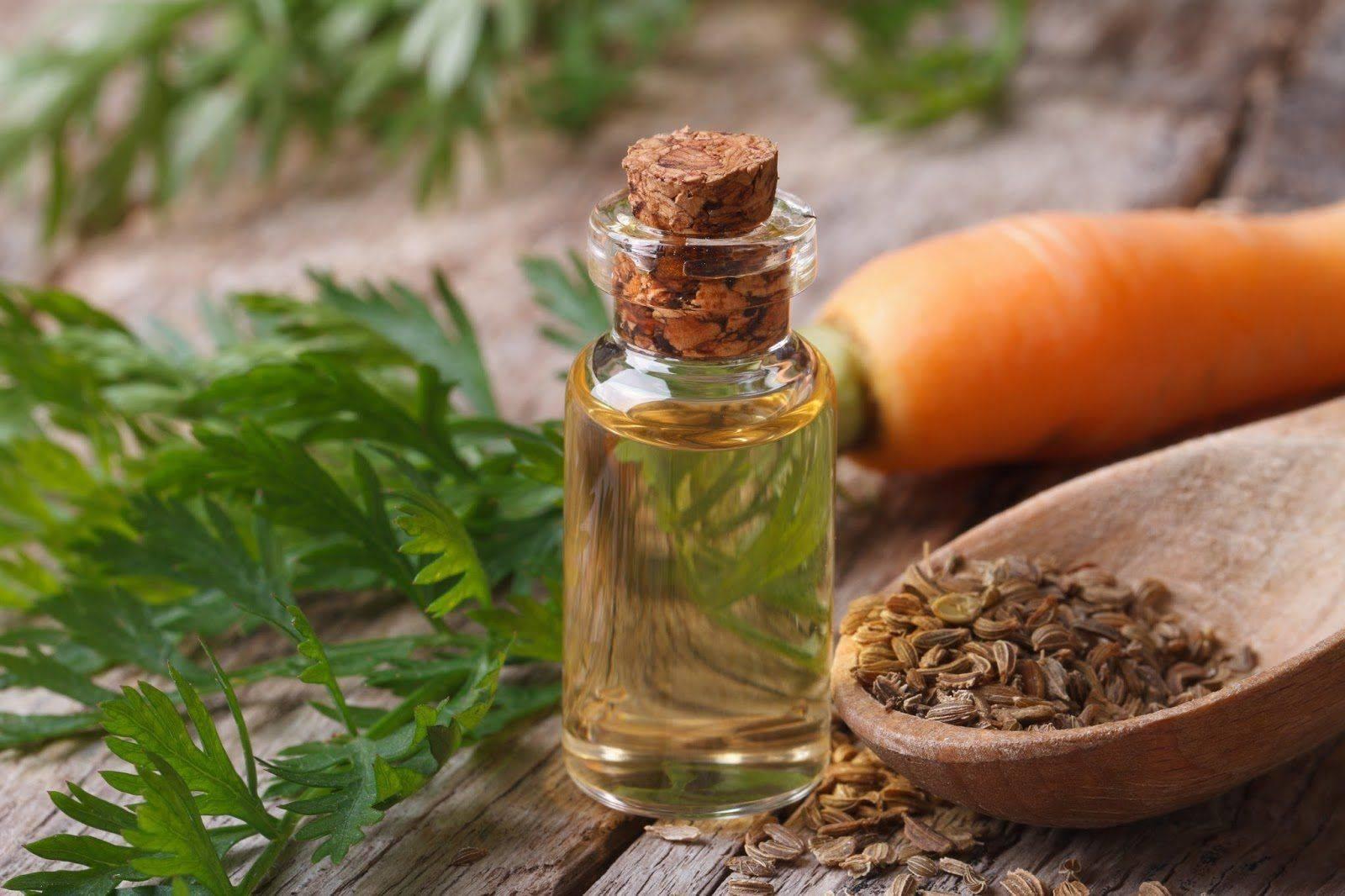 Масло семян моркови: особенности применения для лица, как сделать морковное эфирное средство в домашних условиях, рецепт как приготовить, свойства, польза