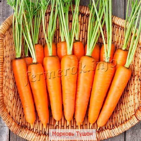 """Морковь тушон - описание сорта, фото, отзывы, посадка и уход - журнал """"совхозик"""""""