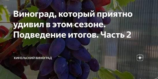 Выращивание винограда для начинающих как бизнес
