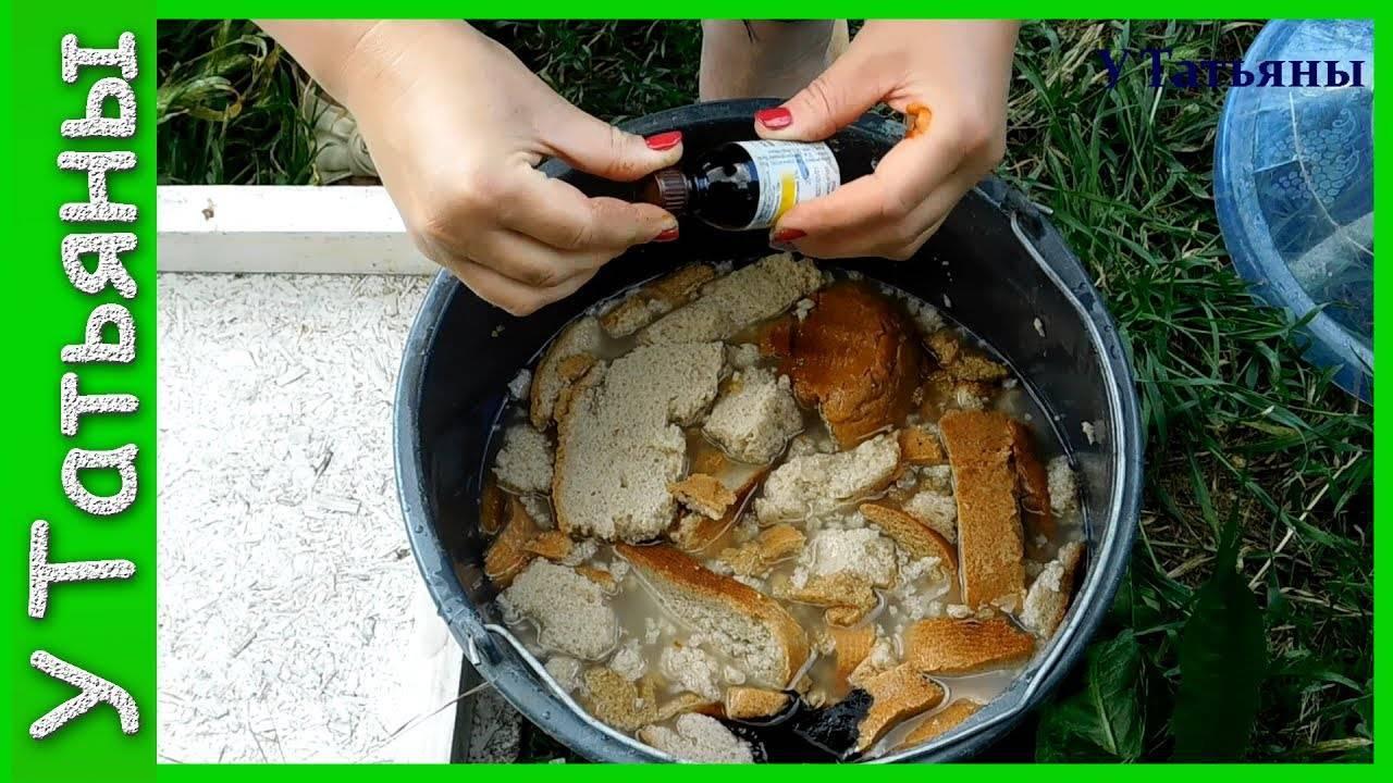 Как использовать хлебную подкормку для огурцов