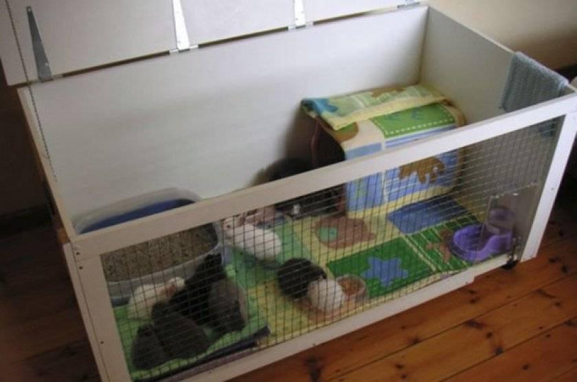 Кормушки для кроликов своими руками: поилки, для сена и зерна