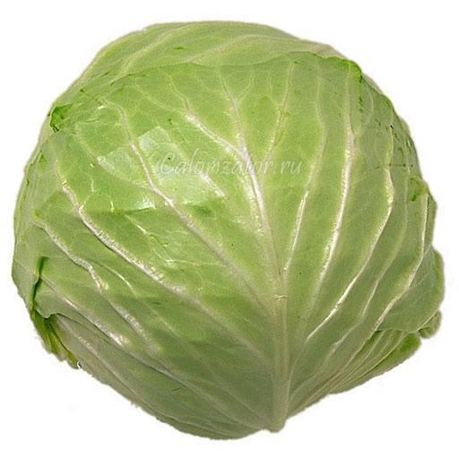 Польза и вред молодой капусты для организма: чем полезна для взрослых и детей, имеет ли отрицательные свойства, а также как избавить овощ от нитратов?