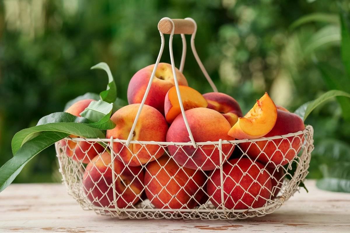 Нектарины вырастить в подмосковье. правила выбора сорта персика и нектарина для подмосковья