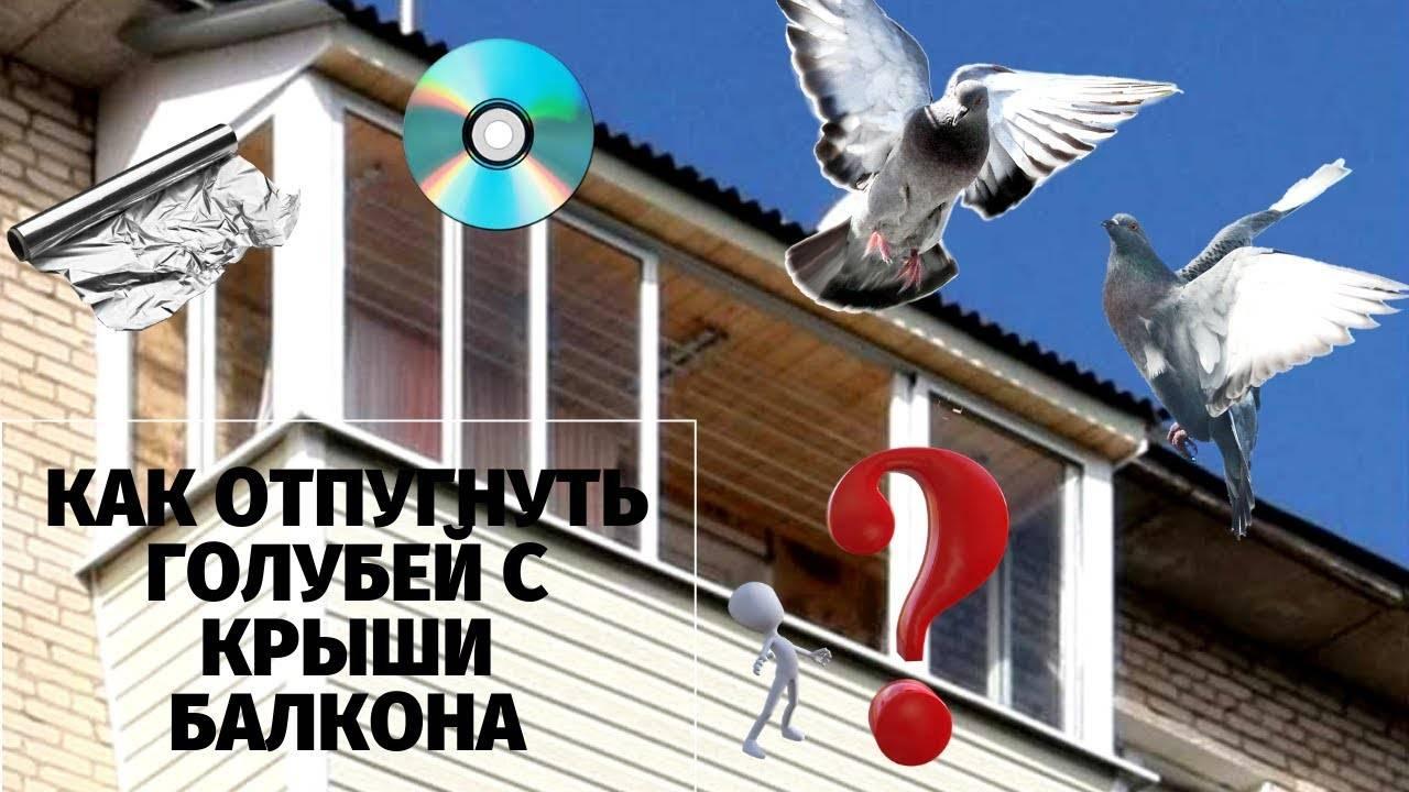 Отпугиватели голубей: как отпугивать? ультразвуковые, для балкона, подоконника