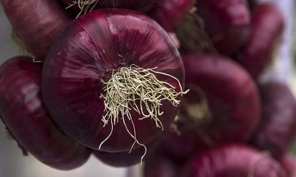 Лук ялтинский: описание с фото, и как посадить красный репчатый овощ севком и семенами, можно ли вырастить в средней полосе, когда сеять, как отличить от подделки?