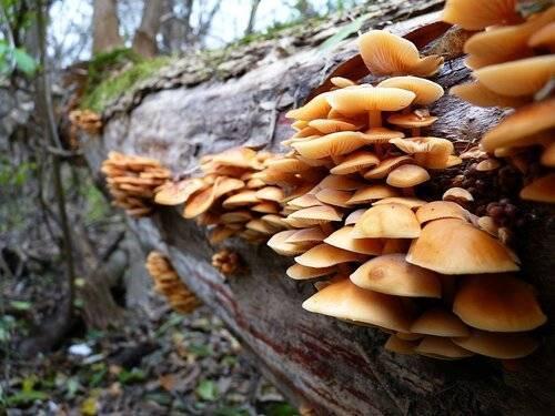 Виды грибов кубани в 2019 году
