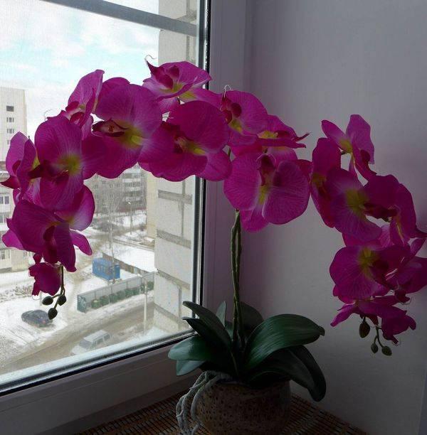 Фаленопсис микс: уход в домашних условиях после магазина, фото цветка орхидеи после покупки, а также определение, что это такое