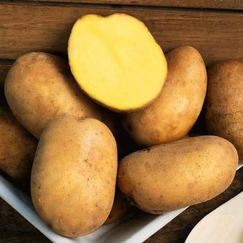 """Картофель """"голубой дунай"""": описание сорта, характеристики, фото и его особенности русский фермер"""