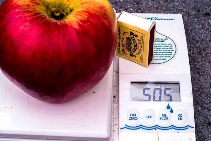 ✅ какое самое большое яблоко в мире - питомник46.рф