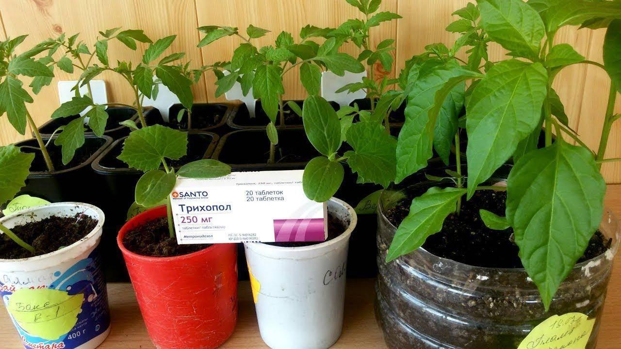 Всё о препаратах для томатов: фитоверм, атлет, завязь, тур и другие, их отличия по составу и применению