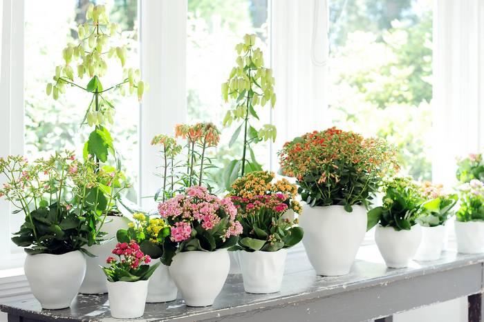Популярные пестролистные комнатные растения: фото и названия