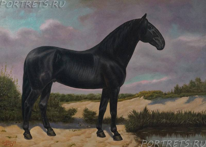 Канадская порода лошадей — описание и фото | мои лошадки