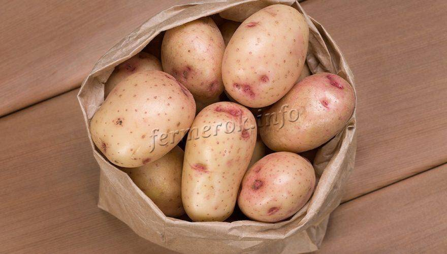 Картофель синеглазка: описание и характеристика сорта, отзывы, фото