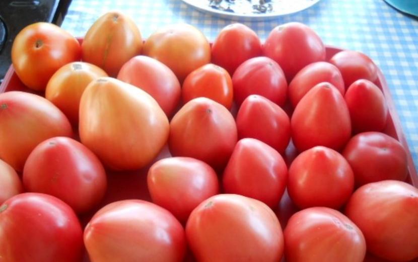 Томат орлиный клюв: урожайность и описание сорта, отзывы