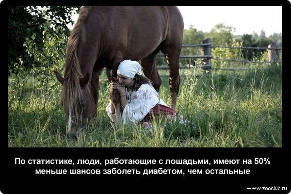 Лошади и их функции, интересные факты о конях, сведения о конном спорте