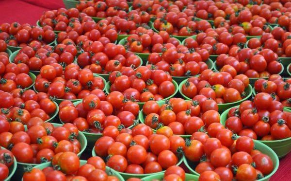 Как пасынковать помидоры в открытом грунте фото