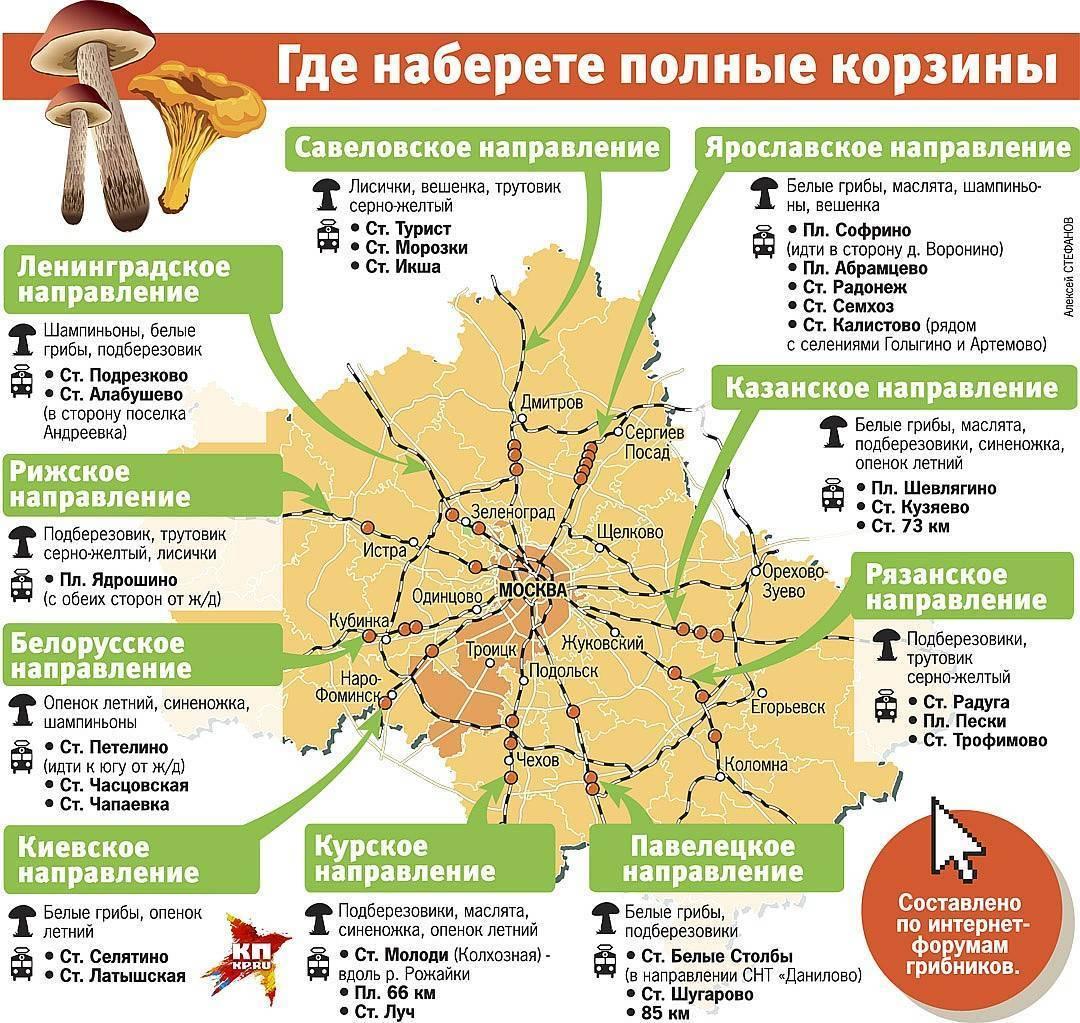 Грибы ульяновской области 2021: когда и где собирать, сезоны и грибные места