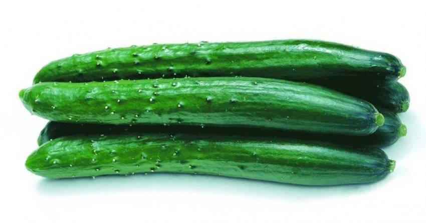 Огурец аллигатор f1: особенности крупноплодного гибрида, отзывы