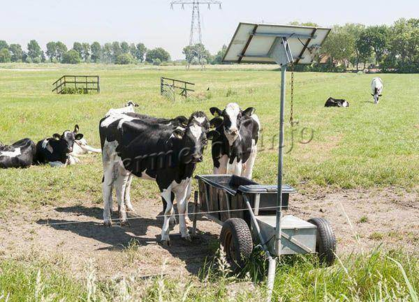 Устройство кормушек и поилок для крупного рогатого скота