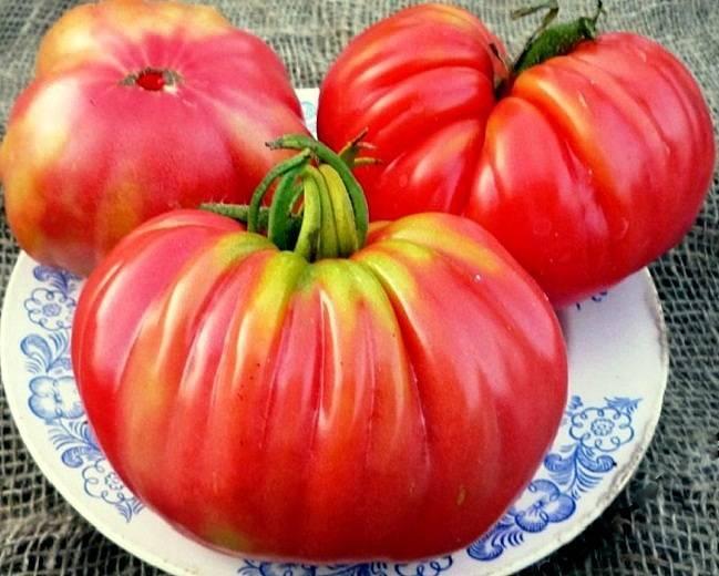 Томат царь колокол - описание сорта, характеристика, урожайность, отзывы, фото