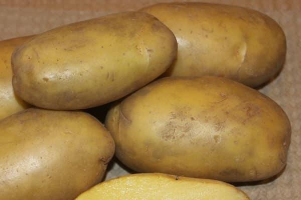 Картофель «метеор» — ранний, устойчивый, урожайный